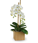 Opulent Orchids from Boulevard Florist Wholesale Market
